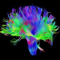 neurotoxicology